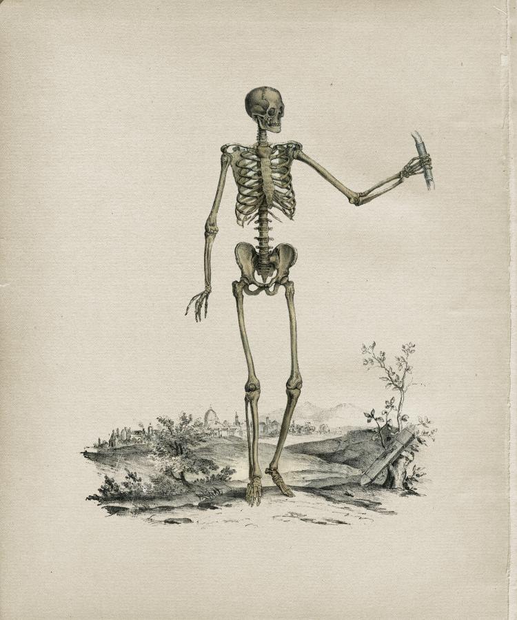 Human Skeleton Anterior View Print