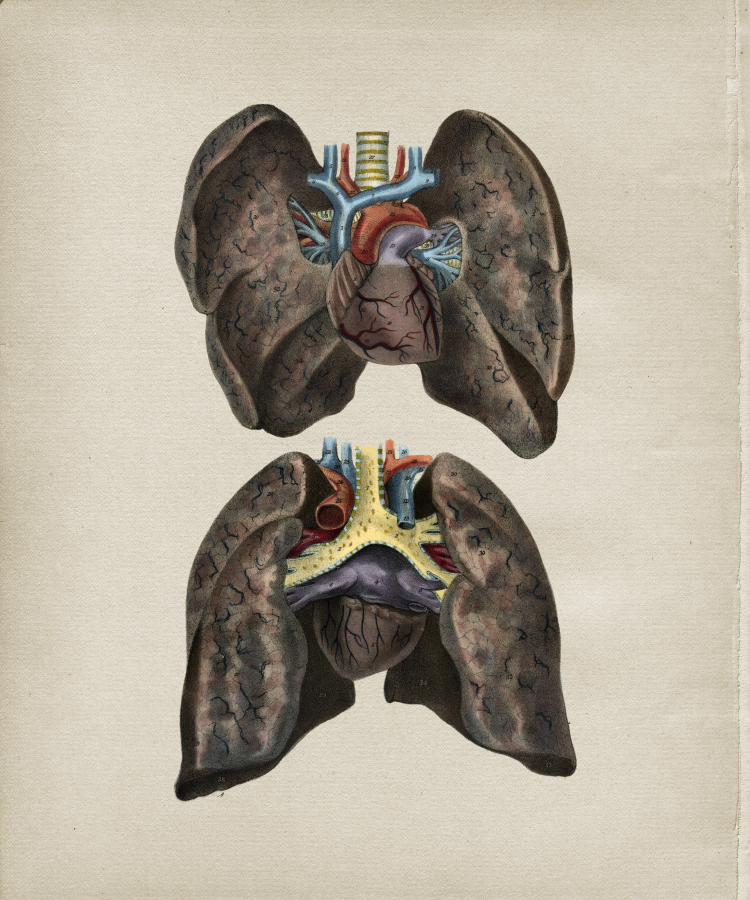 Lung Anatomy Print